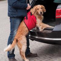 Honden-draaghulp 'Helping Harness'