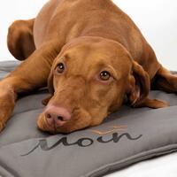 Hondendeken BE NORDIC Moin