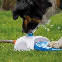 Fontein voor honden