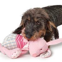 Hondenspeelgoed Nanum - Haas -
