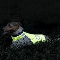 Honden-veiligheidsvest Night walk
