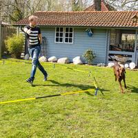Longeerset voor honden